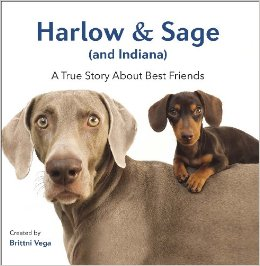 harlow and sage book.jpg-large