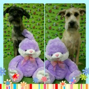 easter bunny and dogs